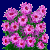 Visit my Rice button aster in Flowergame!